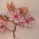 akvarel květina